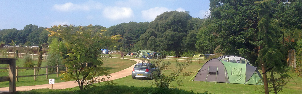 Camping at Haldon Forest Holiday Park